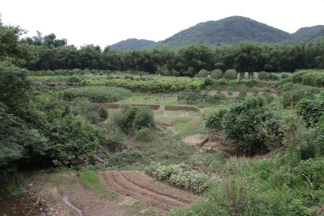 Felder bei Yangshuo